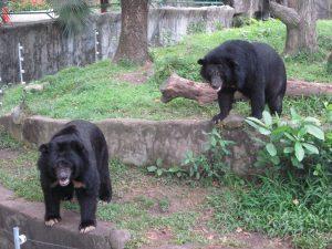 zoo-ho-chi-minh-city-vietnam