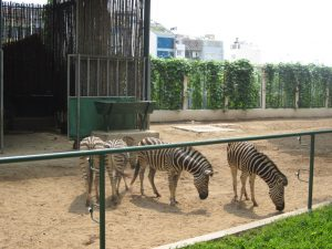 zoo-saigon-district-1-vietnam